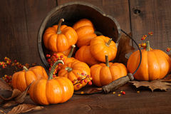 Wooden Bucket Filled With Tiny Pumpkins Royalty Free Stock Photo