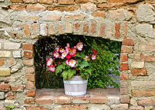 Wooden bucket with flowering begonia Royalty Free Stock Images