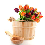 Wooden bucket full of tulips. Wooden sauna bucket with a bouquet colorful tulips Stock Image