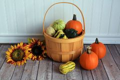 Wooden bucket of gourd out  pumpkin sunflowers Royalty Free Stock Photo
