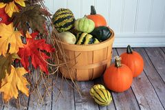 Wooden bucket of gourds and pumpkin and color leafs Stock Photos