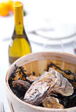 Wooden bucket with oysters Royalty Free Stock Photography