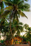 Wooden bungalow among tropical  palms Stock Photography