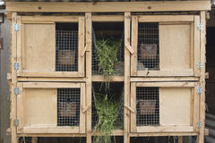 A wooden cage for breeding rabbits. Stock Images