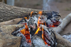 Wooden camp fire Royalty Free Stock Photo