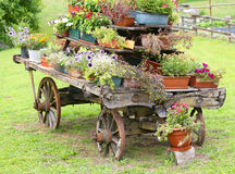 Wooden cart decorated with many flowers in the summer Royalty Free Stock Image