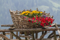 Wooden cart with flowers Royalty Free Stock Photos