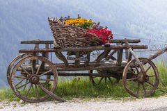 Wooden cart with flowers Royalty Free Stock Photo