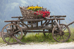 Wooden cart with flowers Royalty Free Stock Images