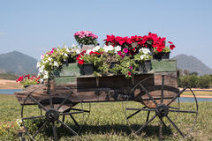 Wooden cart full of colorful flowers Stock Photography