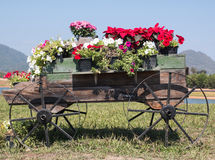 Wooden cart full of colorful flowers Royalty Free Stock Photos