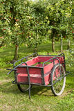 Wooden cart in orchard Stock Photography