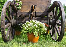 Wooden cart with  white flowers Royalty Free Stock Photo