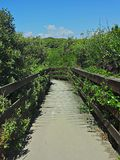 Wooden catwalk in the dunes Royalty Free Stock Photos