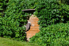 Wooden cellar door with overgrown creepers village. Old wooden cellar door with green overgrown creepers on village Royalty Free Stock Image