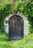 Wooden cellar door Stock Image