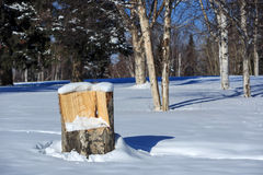 Wooden chair, white snow day and big tree Royalty Free Stock Photos
