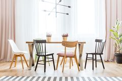 Bright pastel dining room. Wooden chairs at table with heathers in bright pastel dining room interior with drapes and ficus stock photos