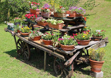 wooden chariot decorated with many pots of flowers in the meadow Royalty Free Stock Photos