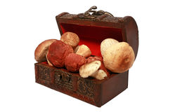 Wooden chest with mushrooms Royalty Free Stock Image