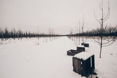 Wooden chests in orchard in winter scenery. Wooden chests on a snow in orchard Royalty Free Stock Image