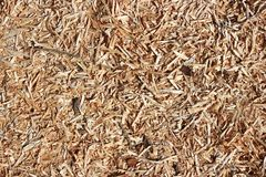 Wooden chips background. Wooden chips on the floor - abstract background Stock Images