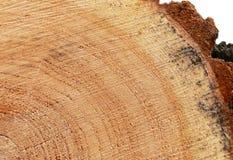 Wooden circle cut texture. Rough wooden circle cut texture of a log closeup Royalty Free Stock Photography