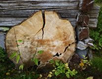 Wooden circle with a split cut royalty free stock photo