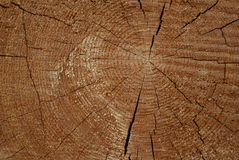 Wooden circle with a split cuts. Texture Stock Images