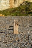 Wood sea defence  structure. Royalty Free Stock Photo