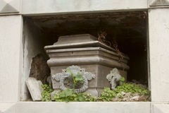 Wooden coffin in overgrown crypt. Royalty Free Stock Image