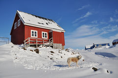Wooden colourful cabin and dog. Houses in the Kulusuk village, Greenland Stock Photography