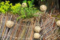 Wooden composition with plants Royalty Free Stock Image