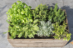 Wooden container with fresh herbs Stock Image