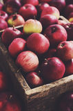 Wooden container with organic apples Royalty Free Stock Image