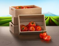 A wooden containing tomatoes for products presentation. A wooden crate on the table which containing fresh ripe tomatoes from an organic farm using for Royalty Free Stock Images