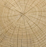 Wooden core Stock Photography