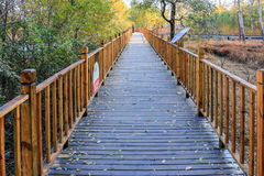 Wooden corridor. A wooden corridor with a bright background in the fall Stock Image