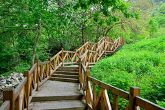 The wooden corridor of the forest Royalty Free Stock Photos