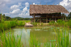 Wooden cottage in rice field and fish pond.  Royalty Free Stock Photos