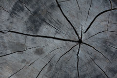 Wooden cracked wall. Royalty Free Stock Image