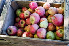 Wooden Crate of Apples Stock Photo