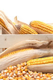 Wooden crate with corn ears Royalty Free Stock Photo