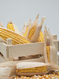 Wooden crate with corn ears Royalty Free Stock Photos