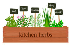 Wooden crate of farm fresh cooking herbs with labels in wooden box. Greenery basil, rosemary, chives, thyme, oregano with text. Horticulture. houseplants Royalty Free Stock Photography