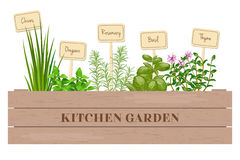 Wooden crate of fresh cooking herbs with labels in wooden box. Royalty Free Stock Photo