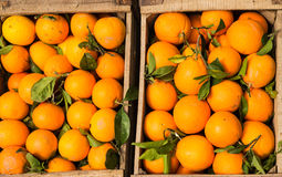 Wooden crate full of oranges Stock Image