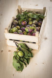 Wooden crate with plums Stock Photos