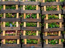 Wooden crates with flowers Stock Image