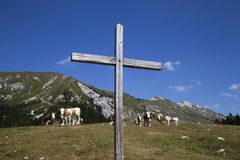 Wooden cross and cows on the mountain Royalty Free Stock Photography